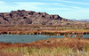 AZ-Yuma-Martinez Lake-Imperial Wildlife Refuge-Ironwood Point-2006-02-01-0007