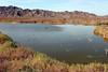 AZ-Yuma-Martinez Lake-Imperial Wildlife Refuge-Mesquite Point-2006-02-01-0002