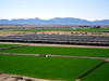 AZ-Mohawk Pass-McElhanaey Cattle Company-2004-01-03-0004