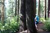 CA-Arnold-Calavares Big Tree State Park-2005-08-21-0002