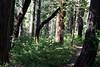 CA-Arnold-Calavares Big Tree State Park-2005-08-21-0005