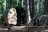 CA-Arnold-Calavares Big Tree State Park-2005-08-21-0001