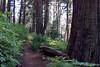 CA-Arnold-Calavares Big Tree State Park-2005-08-21-0007