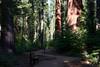 CA-Arnold-Calavares Big Tree State Park-2005-08-21-0018