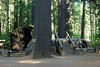 CA-Arnold-Calavares Big Tree State Park-2005-08-21-0020