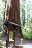 V-CA-Arnold-Calavares Big Tree State Park-2005-08-21-0004
