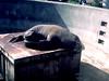 CA-Sea World-1984-06-04-S0001