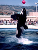 V-CA-Sea World-1984-06-04-S0002