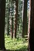 V-CA-Arnold-Calavares Big Tree State Park-2005-08-21-0002