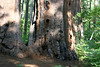 CA-Arnold-Calavares Big Tree State Park-2005-08-21-0009