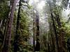 CA-Prairie Creek Redwoods State Park-2003-08-03-0001