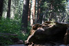 CA-Arnold-Calavares Big Tree State Park-2005-08-21-0013
