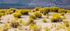 Mono Lake Area