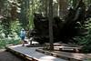 CA-Arnold-Calavares Big Tree State Park-2005-08-21-0010