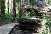 CA-Arnold-Calavares Big Tree State Park-2005-08-21-0015