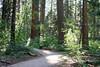 CA-Arnold-Calavares Big Tree State Park-2005-08-21-0016