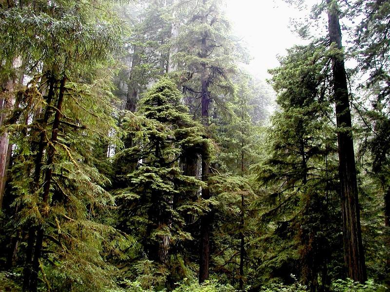 CA-Prairie Creek Redwoods State Park-2003-08-03-0002