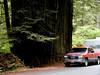 CA-Prairie Creek Redwoods State Park-2003-08-03-0003