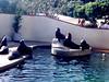 CA-Sea World-1984-06-04-S0003