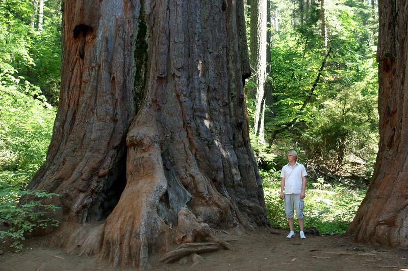 CA-Arnold-Calavares Big Tree State Park-2005-08-21-0017