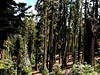 CA-Lassen Volcanic National Park-2003-08-05-0006