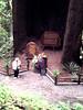 V-CA-Klamath-Trees of Mystery-1985-01-08-S0004
