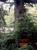 V-CA-Klamath-Trees of Mystery-1985-01-08-S0003