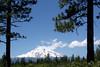 CA-Mt. Shasta-2005-07-02-0010