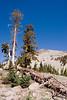 V-CA-Lassen Volcanic National Park-2006-09-04-0001