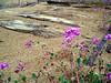 CA-Grays Wells Rd-Plank Road-2005-03-05-0005