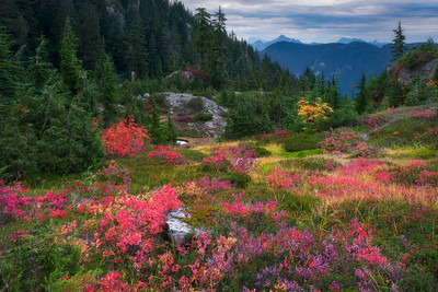 Fall at Mount Seymour Park