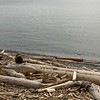 Driftwood / Native, Victoria BC, Canada