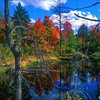 Shallow Lake / Deciduous Forest<br /> Port Loring, Ontario, Canada