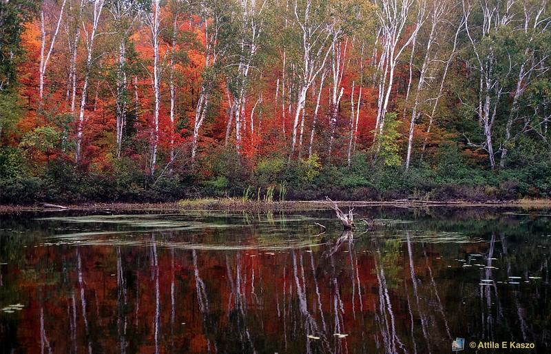 Pickerel Rv. / Deciduous Forest<br /> Ontario, Canada