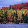 Pine Lake / Desiduous Forest<br /> Ontario, Canada