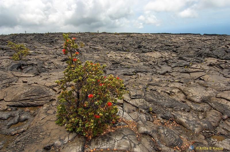 Kilauea Volcano<br /> Big Is., Hawaii, USA