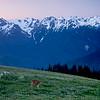 Deer with Olympic Range, Olympic National Park, Washington