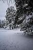 A Winter Surprise
