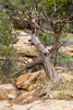CO-Cortez-Mesa Verde-2008-08-31-0016