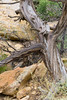 CO-Cortez-Mesa Verde-2008-08-31-0021