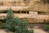 CO-Cortez-Mesa Verde-2008-08-31-0019<br /> <br /> Spruce Tree House