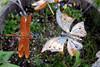 CO-Silverton-2005-09-06-0085