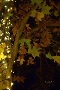 Sedona Christmas 2014 (31) sig