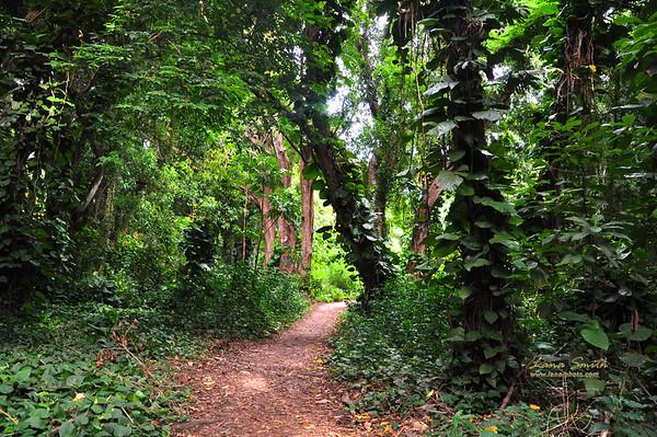 Hawaii Maui Trail in Jungles 2 sig