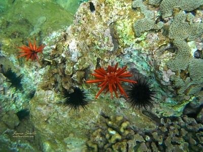 Hawaii Maui sea life sig