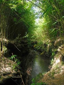 Hawaii bamboo grove sig