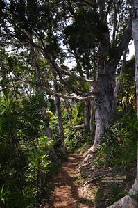 Hawaii Maui trail sig
