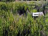ID-Buhl-2003-07-21-0015