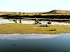 ID-Buhl-Hagerman Wildlife Management Area-2003-07-20-0003