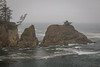 If was a Foggy Cape Arago State Park